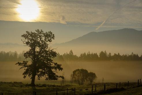 Germany, Nantesbuch, oak tree at morning light - LBF02160