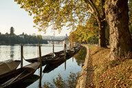Switzerland, Canton of Schaffhausen, Schaffhausen, Rhine river and traditional Weidlings in autumn - ELF01934