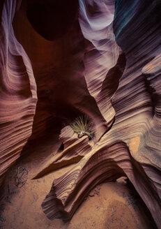 USA, Arizona, Page, Rattlesnake Canyon - FCF01559
