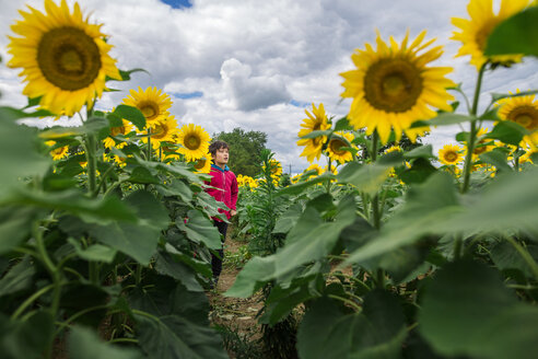 Boy looking away while standing at sunflower farm against cloudy sky - CAVF53155