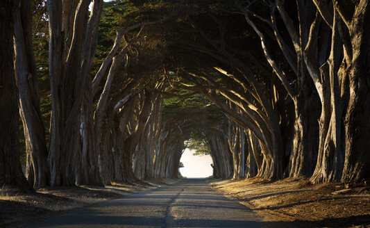 USA, California, Inverness, Treelined road in the evening - FCF01597