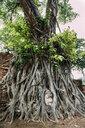Thailand, Ayutthaya, Buddha head in between tree roots at Wat Mahathat - GEMF02461