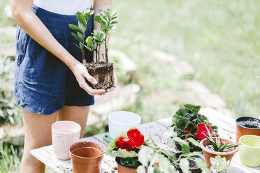 Midsection of woman holding plant while standing at table in yard - CAVF53384