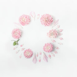 Studio shot of pink flowers over a white background - INGF06344