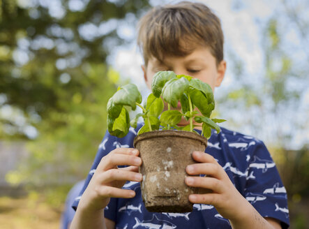 Boy holding potted plant while gardening at backyard - CAVF53725