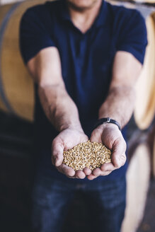 Midsection of brewer holding wheat at warehouse - CAVF53842