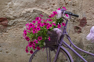 Italy, old bicycle with flowers - LBF02170