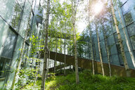 Germany, Hanover, birch trees in the courtyard of an office complex - KLRF00731