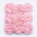 Close-up of pink flowers over a white background - INGF06450