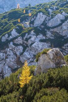 Germany, Bavaria, Upper Bavaria, Berchtesgadener Land, Berchtesgaden National Park - HAMF00530