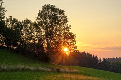 Germany, Bavaria, Allgaeu, East Allgaeu, Swabia, Ussenburg near Rosshaupten, tree at sunrise - LBF02204