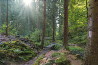 Germany, Extertal, forest path against the sun - FRF00756