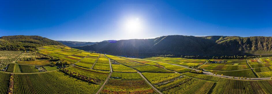 Germany, Cochem-Zell, Biedern, vineyards and Rueberberger Domherrenberg - AMF06179