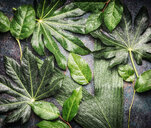 Tropical jungle leaves with water drops - INGF07195