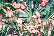 Tropical flowers and leaves on a pink background - INGF07201
