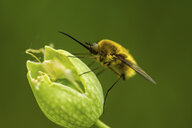 Close-up of insect on flower - CAVF54659