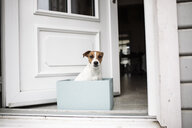 Portrait of Jack Russel Terrier sitting in a cardboard box in front of open house entrance - KMKF00656