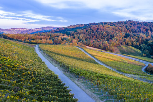 Germany, Baden-Wuerttemberg, Aerial view of Korber Kopf, vineyards in autumn - STSF01803