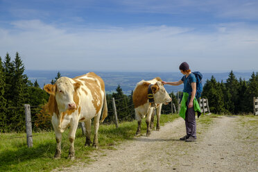 Germany, Upper Bavaria, Chiemgau, Young hiker stroking cow on a pasture - LBF02230