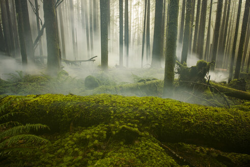 Scenic view of trees growing at North Cascades National Park during foggy weather - CAVF55512