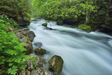 Schwarbach river, Tennengau,, Hallein, Austria - RUEF02052