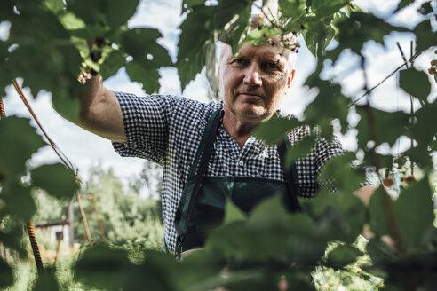 Gardener in garden - VPIF01120