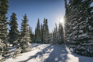 Scenic view of trees on snow covered field against sky during sunny day - CAVF55962