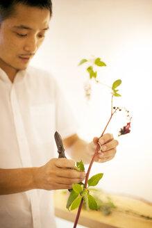 Japanese man standing in flower gallery, working on Ikebana arrangement. - MINF09639