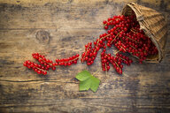 Red currants in basket on wood - LVF07564