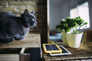 Russian blue cat next to a solar panel charger, tablet and plant - GEMF02560