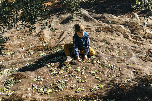 Boy playing with olives in olive orchard - JRFF02125