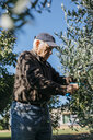 Senior man picking olives from tree - JRFF02128