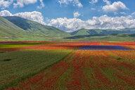 Italy, Umbria, Sibillini National Park, Blooming flowers on Piano Grande di Castelluccio di Norcia - LOMF00772