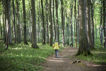 Germany, Mecklenburg-Western Pomerania, Ruegen, Jasmund National Park, hiker in beech forest on hiking trail - MAMF00240