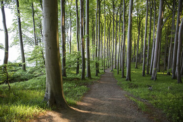 Germany, Mecklenburg-Western Pomerania, Ruegen, Jasmund National Park, Beech forest - MAMF00246