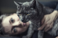 Portrait of grey tabby cat and owner in the background - JATF01063