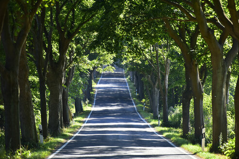 Germany, Ruegen, empty tree-lined road - FDF00280