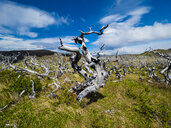 Chile, Patagonia, Torres del Paine National Park, dead trees - AMF06266