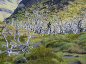 Chile, Patagonia, Torres del Paine National Park, dead trees - AMF06272