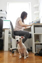 Portrait of white dog waiting at office while owner working at desk - ZEDF01782