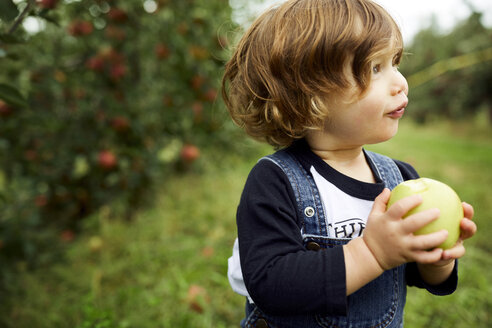 Baby boy holding apple looking away while standing at orchard - CAVF56217