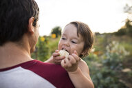 Son eating fruit while being carried by father at community garden - CAVF56262