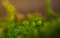 Close-up of fresh green plant growing in the forest - INGF07767