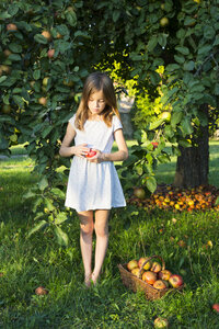 Little girl standing barefoot on a meadow with picked apple in her hands - LVF07570