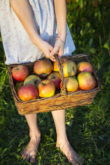 Little girl standing barefoot on a meadow holding wickerbasket of picked apples, partial view - LVF07573