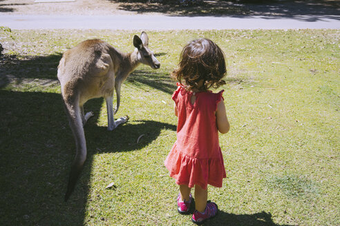 Australia, Queensland, Mackay, Cape Hillsborough National Park, little girl with a kangaroo on a meadow - GEMF02570
