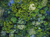 Seychelles, La Digue, Aerial view of rain forest - MMAF00711