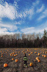 Rear view of boy walking at pumpkin patch against sky - CAVF56661