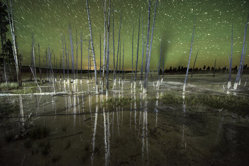 Tranquil view of bare trees against star field at Yellowstone National Park - CAVF56690
