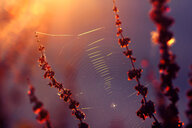 Low angle nature view of a spider web on a plant - INGF07952
